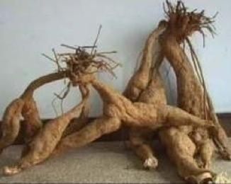 kudzu wortel